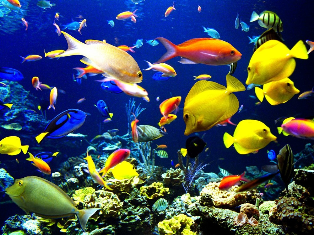 They say there s many more in the sea but rather can for I love the fishes