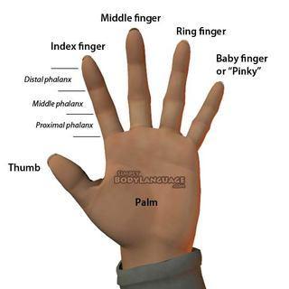 in between fingers called