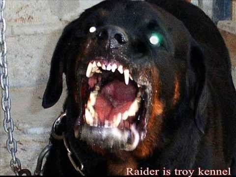 Vicious Wild Dog Breed