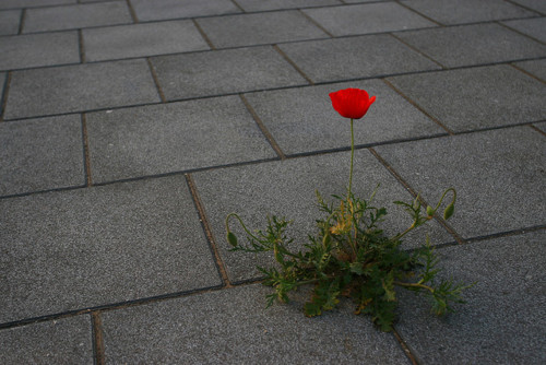 The Rose That Grew From Concrete - Poem by Tupac Shakur