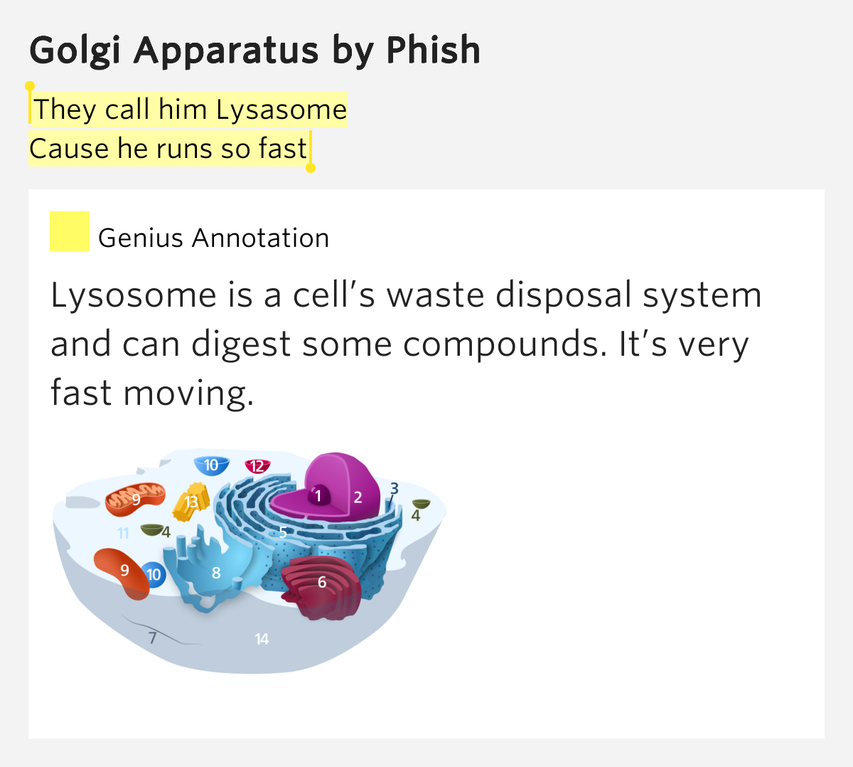 Golgi Apparatus Lyrics