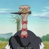 Condor-the-Ninja-Ostrich's photo