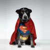 superdog18's photo