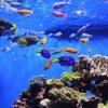 differentexoticfishes's photo