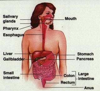 esophagus5
