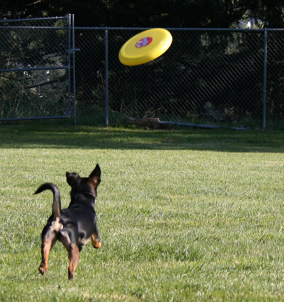 Big W Dog Frisbee