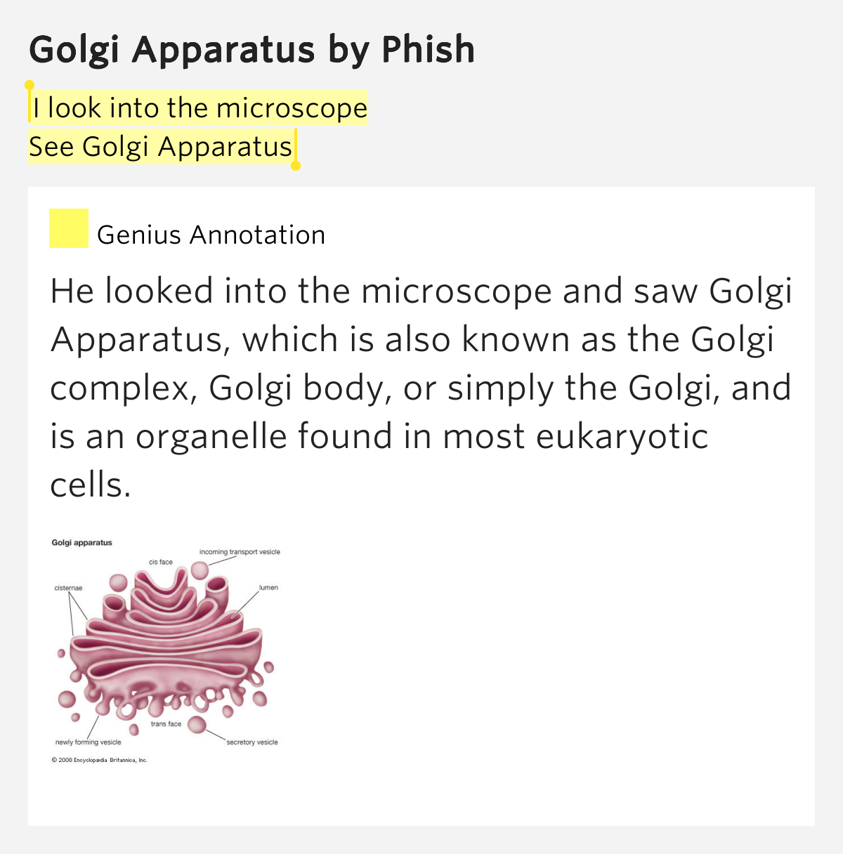 Phish – Golgi Apparatus Lyrics | Genius Lyrics