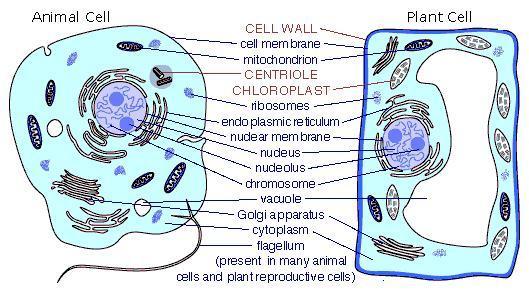 Eukaryotic Plan...