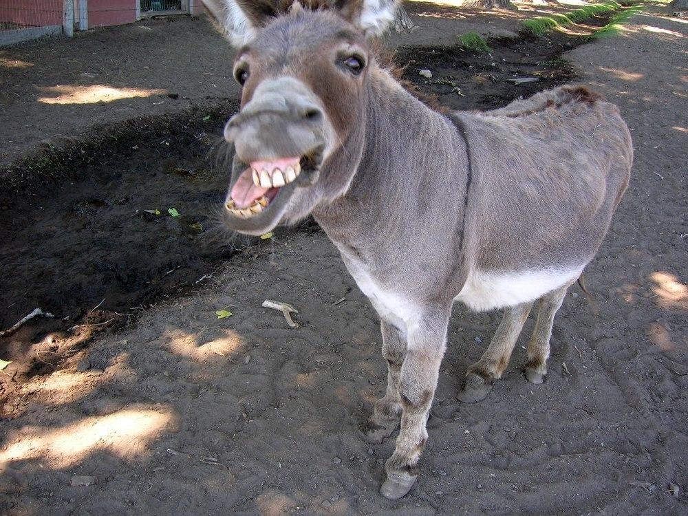 I'm a donkey, – Act a Ass Lyrics Meaning