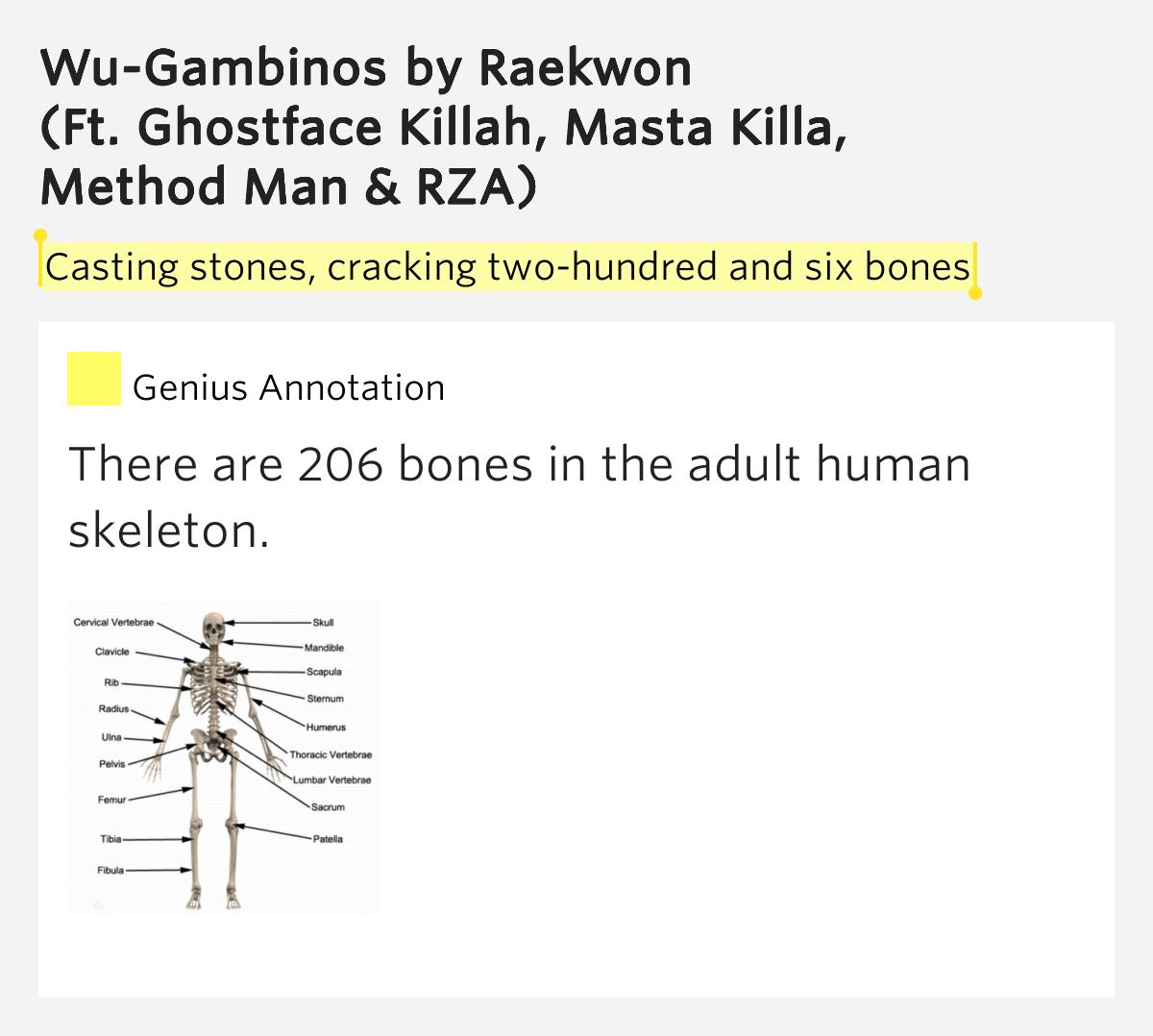 These adult bones lyrics by vertigo