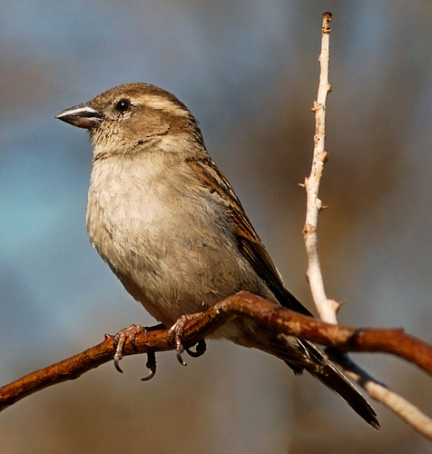 Geno – Good Morning To You (The Birds Are Chirping) Lyrics
