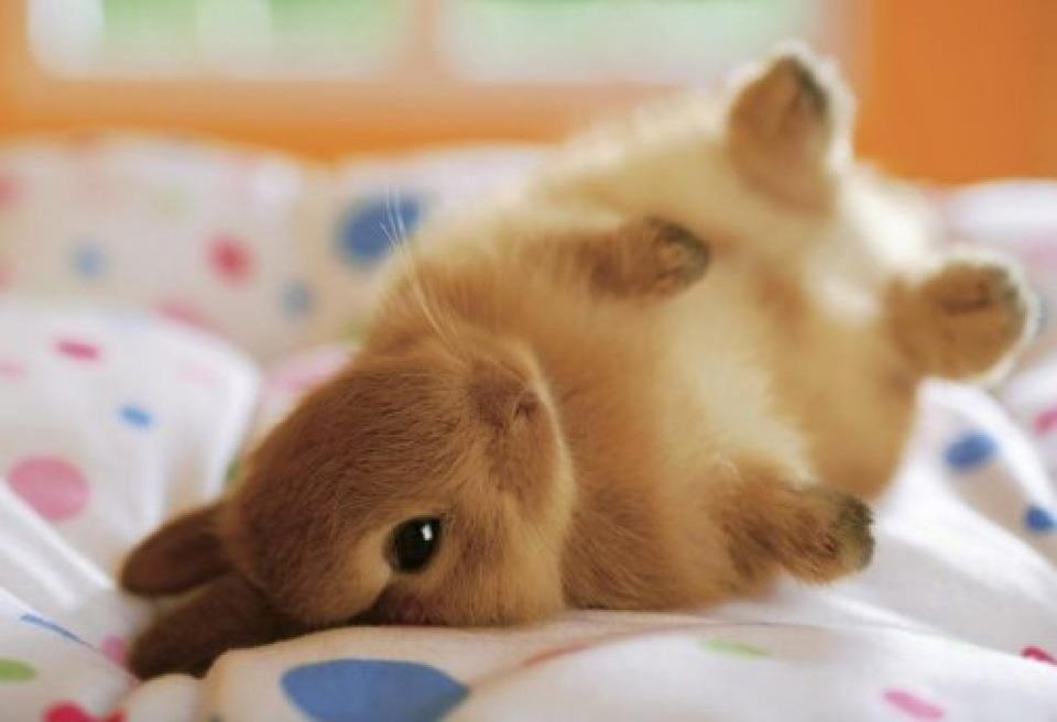 Baby, if you loved me, you would call me your bunny / Tell me that ...