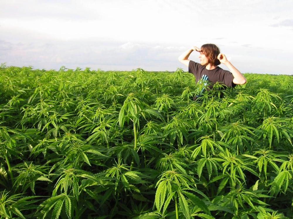 Lyric lyrics to wildwood flower : Jim Stafford – Wildwood Weed Lyrics   Genius Lyrics