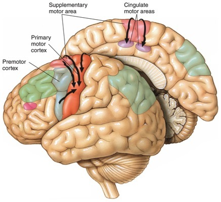 Human Physiology Structure And Function Of The Nervous