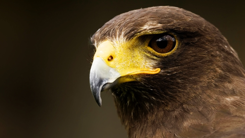 "hawk roosting Hawk roosting topic sentence 1 the opening of the poem establishes the arrogant personality of the hawk intro ted hughes ""hawk roosting"" is a poem written in the."