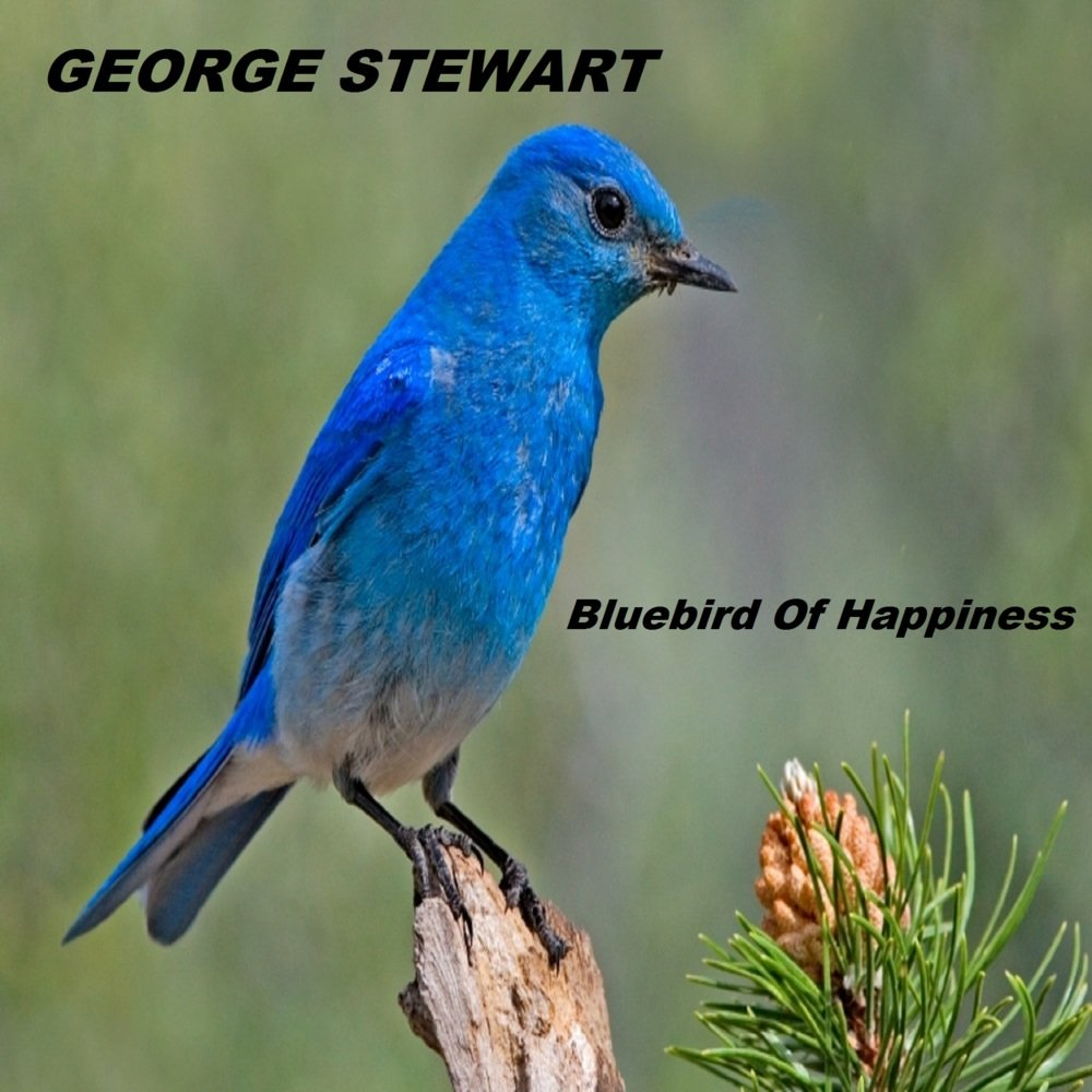 Cover art for Bluebird Of Happiness by George Stewart