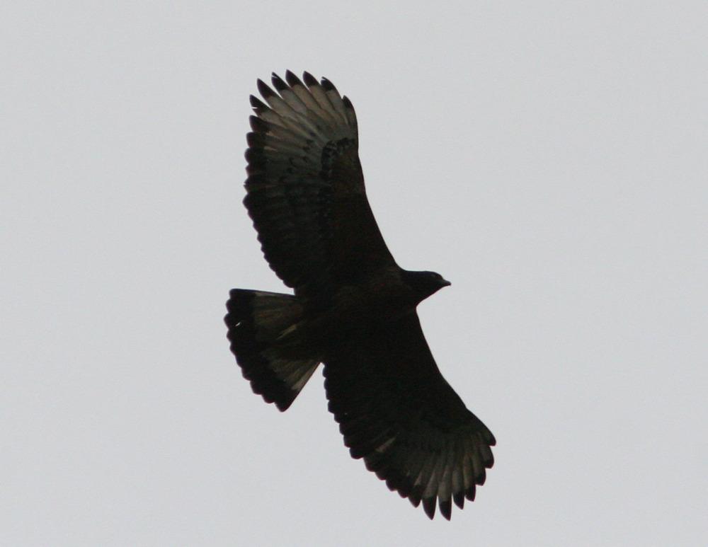 how to keep blackbirds away