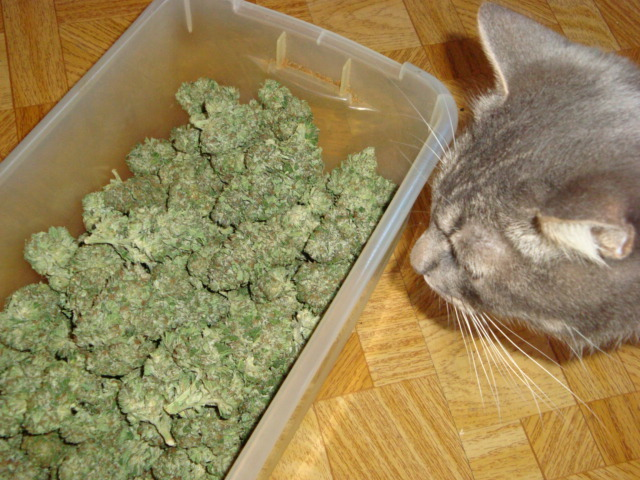 how to stop weed smelling in a bag