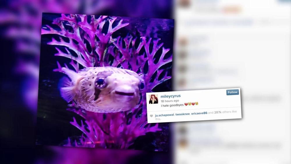 Miley Cyrus – Pablow the Blowfish Lyrics   Genius Lyrics